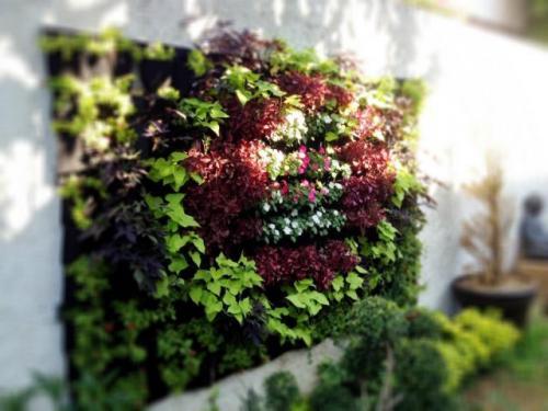 Jardines verticales en tuxtla gutierrez chiapas m xico for Jardines verticales mexico