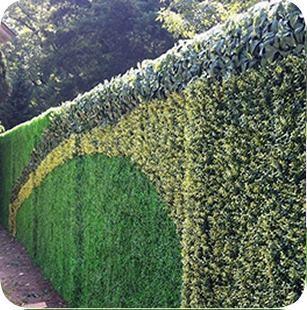 Muros verdes artificiales en guadalajara jalisco m xico for Muros verdes en mexico